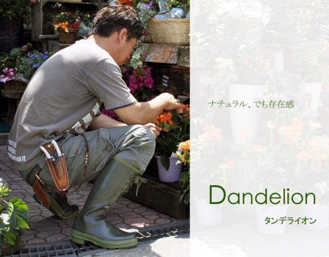 Dandelion (ダンデライオン)
