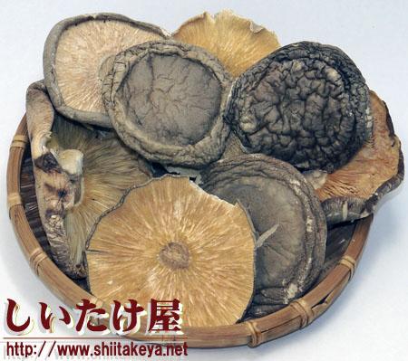 菌床椎茸バレ葉 T