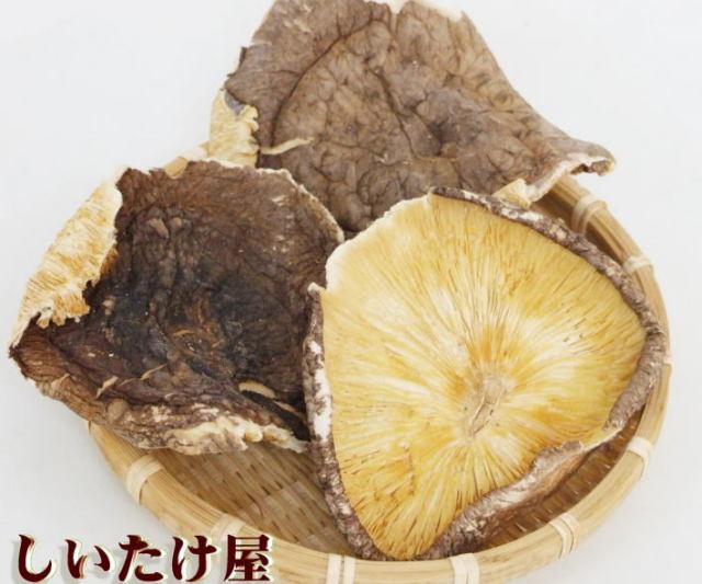 原木椎茸 荒葉T