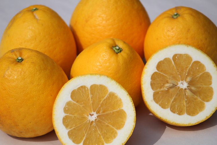 和製グレープフルーツ 河内晩柑 4kg 【産地直送|同梱不可】
