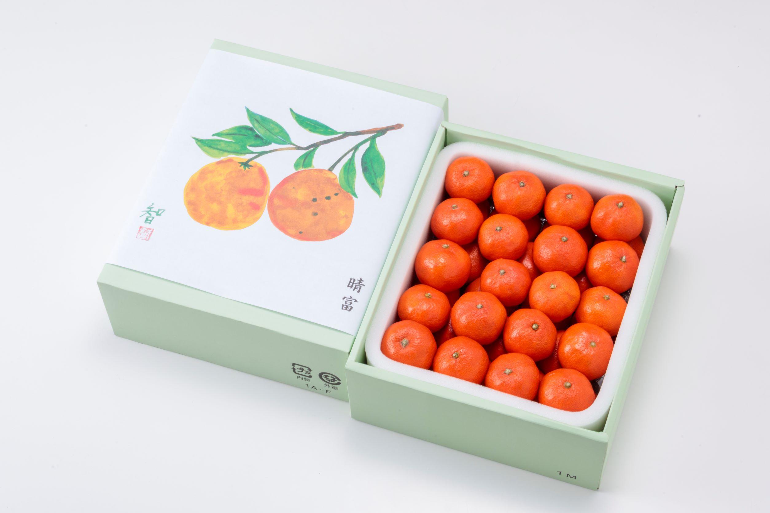 香川県産 金時紅みかん 2.5kg【晴富】