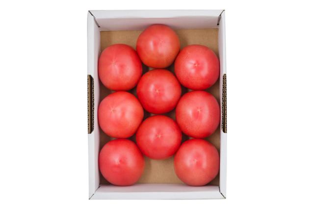 【通販】トマト|北条さんがつくる「とことんトマト」