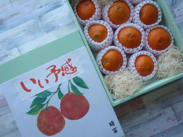 愛媛県産 伊予柑 9玉【晴富】
