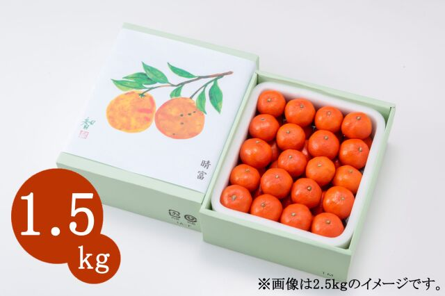 香川県産 金時紅みかん 1.5kg【晴富】