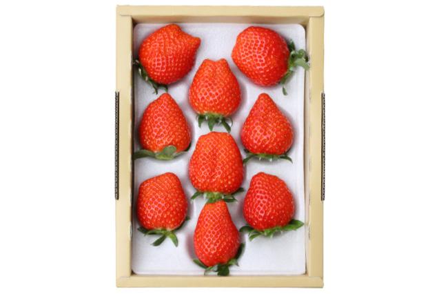 【通販】イチゴ|【長畠高原苺園】朝摘み・即日発送!甘くて酸味の少ない香るいちご「かおり野」 特大8~9粒