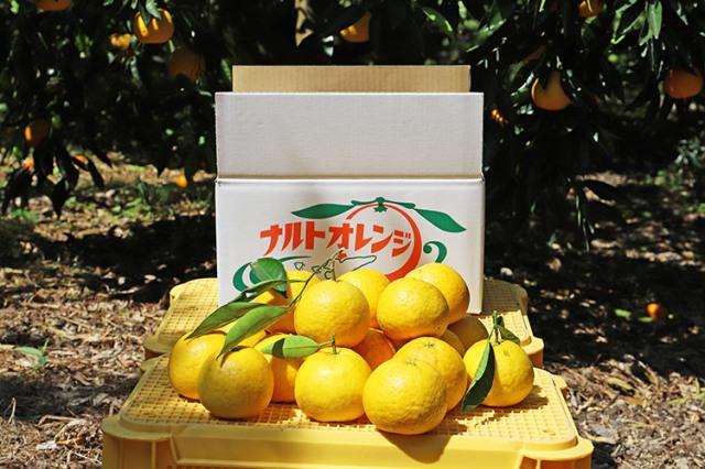 【兵庫県│淡路島】若宮みかん農園 淡路島なるとオレンジ(果実)5kg