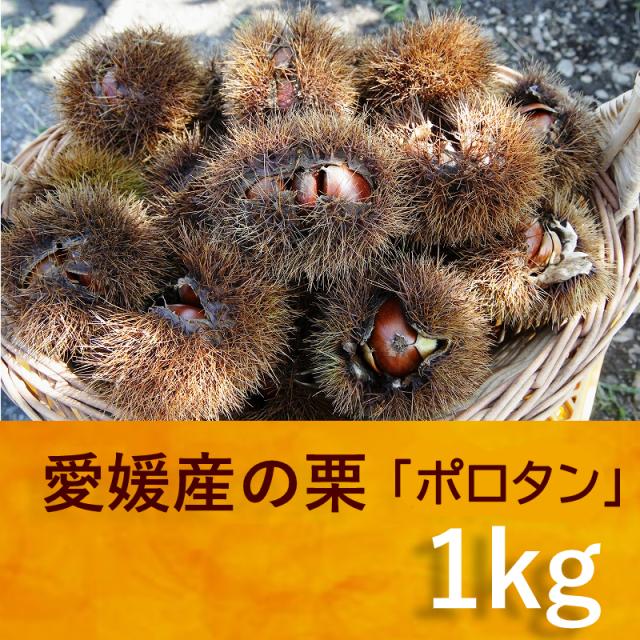 【愛媛県】栗(ポロタン)大粒1kg 【数量限定】