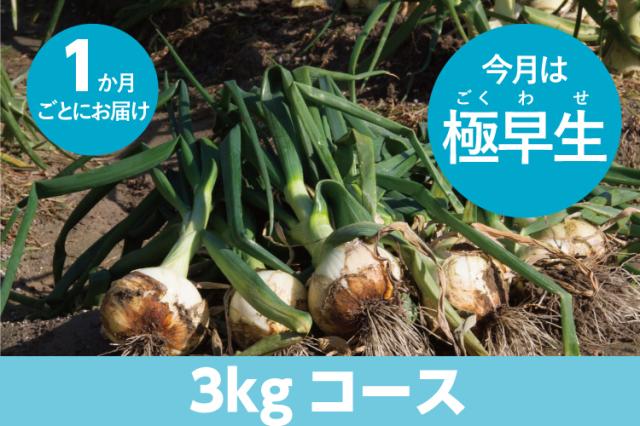 【島の玉ねぎ定期便】3kgコース:1ヵ月に1回お届け