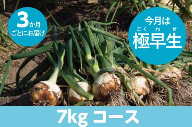 【島の玉ねぎ定期便】たっぷりコース(7kg~8kg):3ヵ月に1回お届け