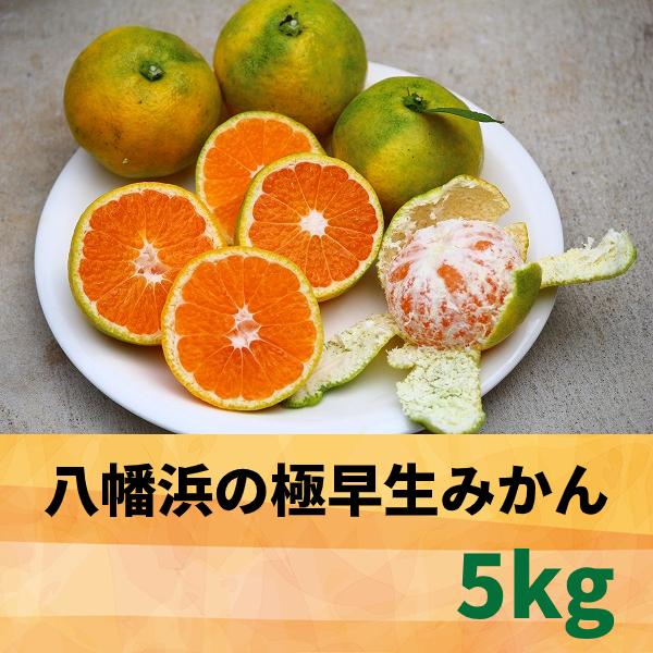 【愛媛県】八幡浜の極早生みかん5.0kg 【産地直送・同梱不可】