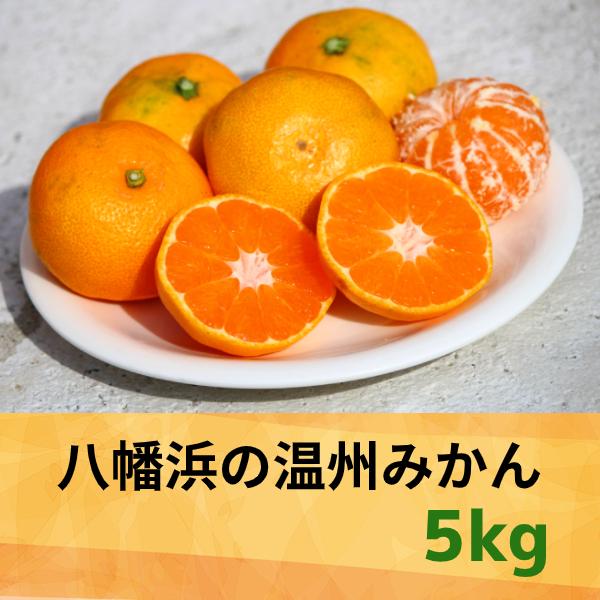 【愛媛県】八幡浜の温州みかん5.0kg 【産地直送・同梱不可】