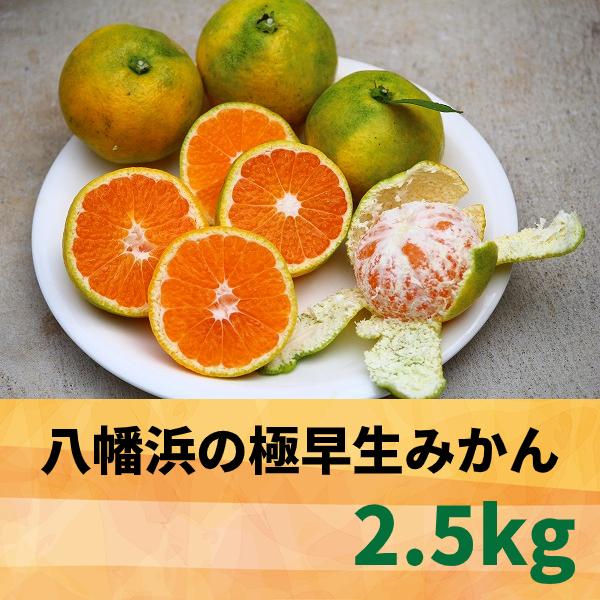 【愛媛県】八幡浜の極早生みかん2.5kg 【産地直送・同梱不可】