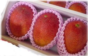奄美完熟マンゴー秀品1kg(送料無料)(2~3個入り)予約受付開始!(お届けは7月20日頃から~)