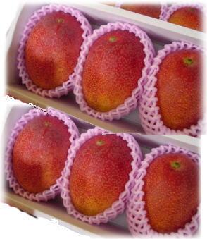 奄美完熟マンゴー秀品2kg(送料無料)(4~6個入り)予約販売受付開始!(お届けは7月20日頃から)