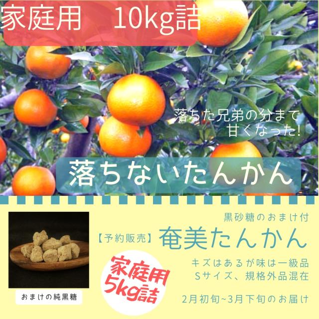 【10kg】2019年・完熟たんかん(おまけ付)販売開始!家庭用(規格外品含)10kg