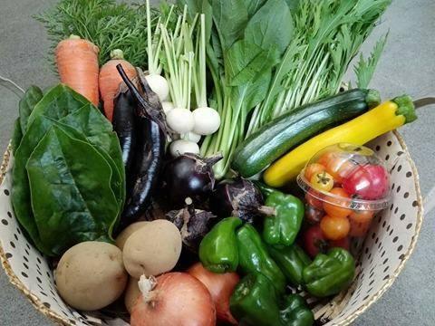 「ふぁーむ陽明(はるあ) 野菜セット (7~10種類 / 2~4人分:およそ1週間で食べきれる量です)」 【毎週月曜日と金曜日に産地より発送】 ~めぐる・自然の法則を応用して栽培された信州産の野菜・果樹~