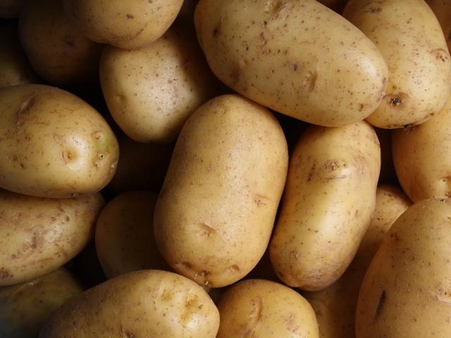 「Sibaenn (さいばえん) じゃがいも (8kg)」 【毎週月火曜日と土曜日に農園より発送】 ~テネモス理論・自然の法則を応用して栽培された信州産の野菜~