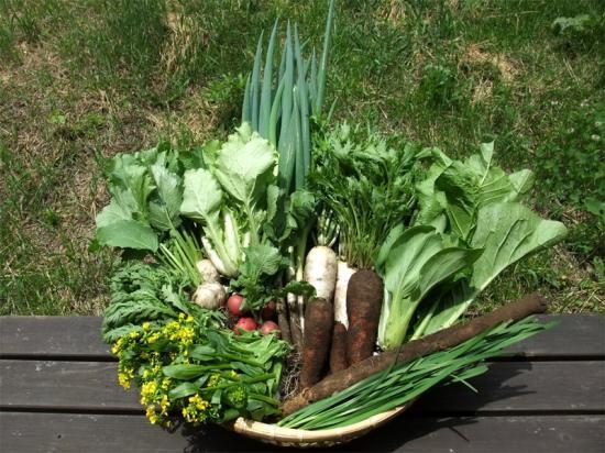 「水輪ナチュラルファーム 野菜セットA・B (Aセット:野菜10~15種類 / Bセット:野菜15~20種類)」 【毎週月曜日と水曜日に産地より発送】 ~次代を担う若ものたちが農薬・化学肥料を一切使わず自然栽培でつくる優しいお野菜です♪~
