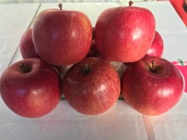 【限定品】 「ITO果樹園のリンゴ サンふじ (3キロ/5キロ/10キロ)」 ~テネモス理論・自然の法則を利用して栽培された信州飯綱産減農薬リンゴ~