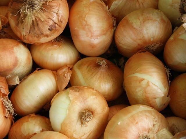 「玉ねぎ (1kg・4kg・10kg)」 ~めぐる・自然の法則を応用して栽培された信州産タマネギ~