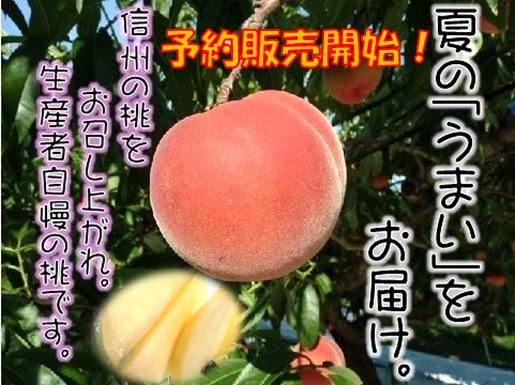 桃,通販,川中島白桃,おどろき,お中元,もも