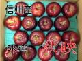 秋映,りんご,林檎,産直市場,長野,信州