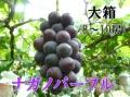 ナガノパープル,ぶどう,産直市場ヤマサン