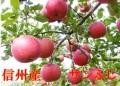 りんご,サンふじ,産直,産直市場ヤマサン,長野,信州