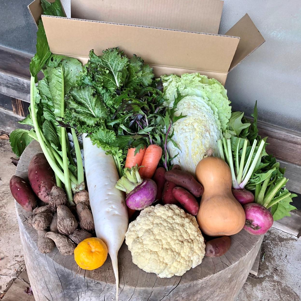 【定期宅配】 無農薬・自然栽培 季節の産直野菜いろどりセット Mサイズ 8~10種類