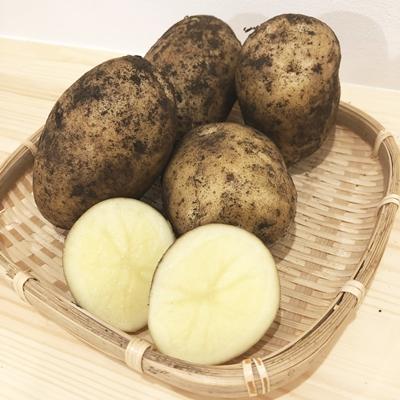 煮崩れしずらいジャガイモ・デジマ(出島)3kg【農薬・化学肥料不使用】