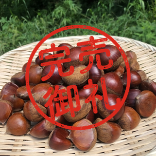 【好評につき完売】 【予約販売】大楽さん家の元気な栗 1kg【龍ヶ崎産】