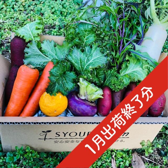 『出荷終了』【定期宅配】 無農薬・自然栽培 季節の産直野菜いろどりセット Sサイズ 6~8種類