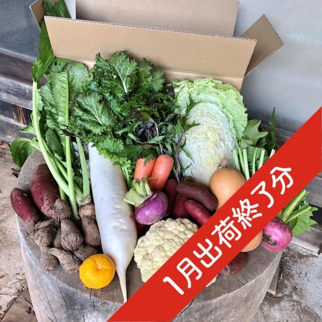『出荷終了』【定期宅配】 無農薬・自然栽培 季節の産直野菜いろどりセット Mサイズ 8~10種類