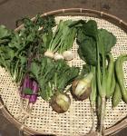 季節のお野菜セット 3~5名様用