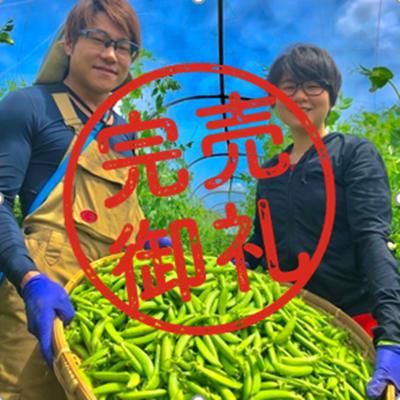 【無農薬】シャキシャキ!ポリポリ!食感が楽しい春のエンドウ豆セット(500g)
