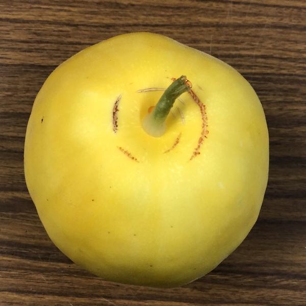 【予約商品】さわやかな甘み・夏の果実マクワウリ 3玉セット【農薬・化学肥料不使用】