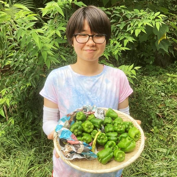小学生も大好き!美味しいピーマン2種類セット【無農薬・無化学肥料】