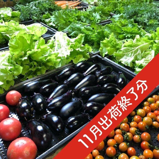 『出荷終了』季節のお野菜セット 3~5名様用 2020年11月