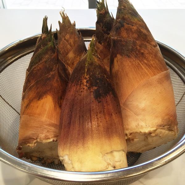 【予約商品】採れたて天然タケノコ:龍ヶ崎農場の裏山で採れました
