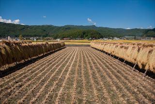 米作りに最適な日本の気候