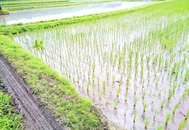 なぜ日本では農薬がたくさん使われているのか