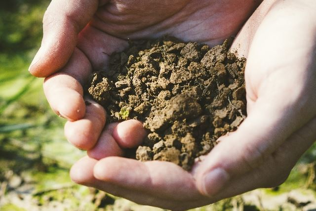 肥沃な土壌