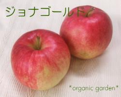 三上さんの有機りんご「ジョナゴールド」