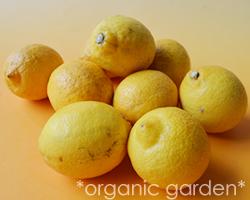 JAS有機 国産レモン 1kg