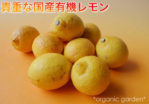 国産有機レモン入荷中