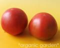 JAS有機 トマト 2~4玉