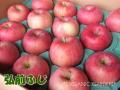 [三上さんの有機栽培りんご]JAS有機 りんご 約4kg【送料無料】【同梱不可】