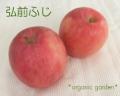 三上さんの有機りんご「弘前ふじ」