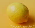 JAS有機 国産レモン 1玉