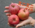 ミニミニ有機ふじりんご